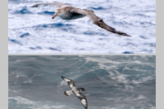 1. Albatross and Petrel on our way to ANTARCTICA