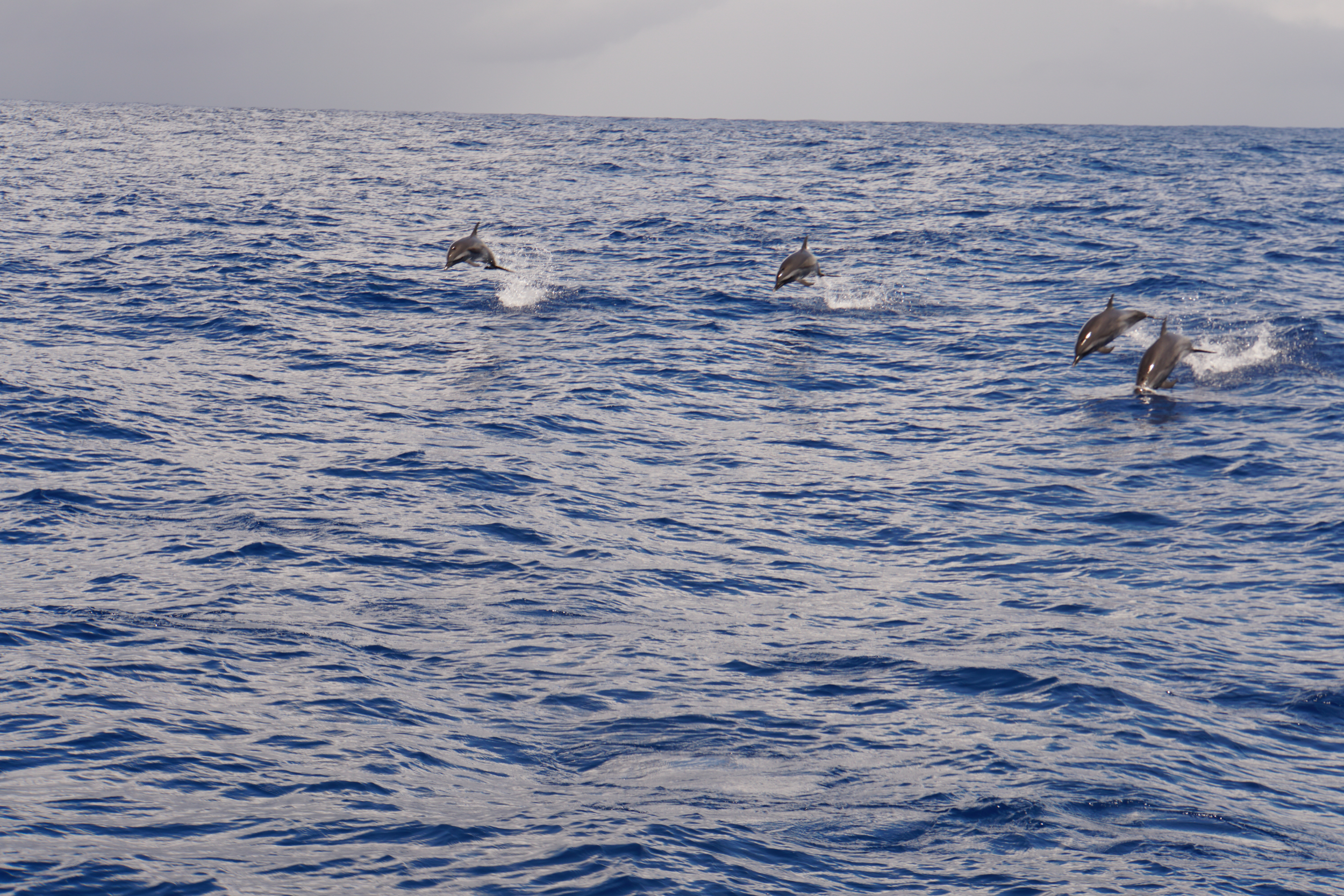 18. Dolphins coming to play
