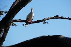 38. Red footed Boobie