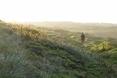 47. Willy hiking arouns Sueste Bay