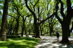 6. Walking in the park, Buenes Aires