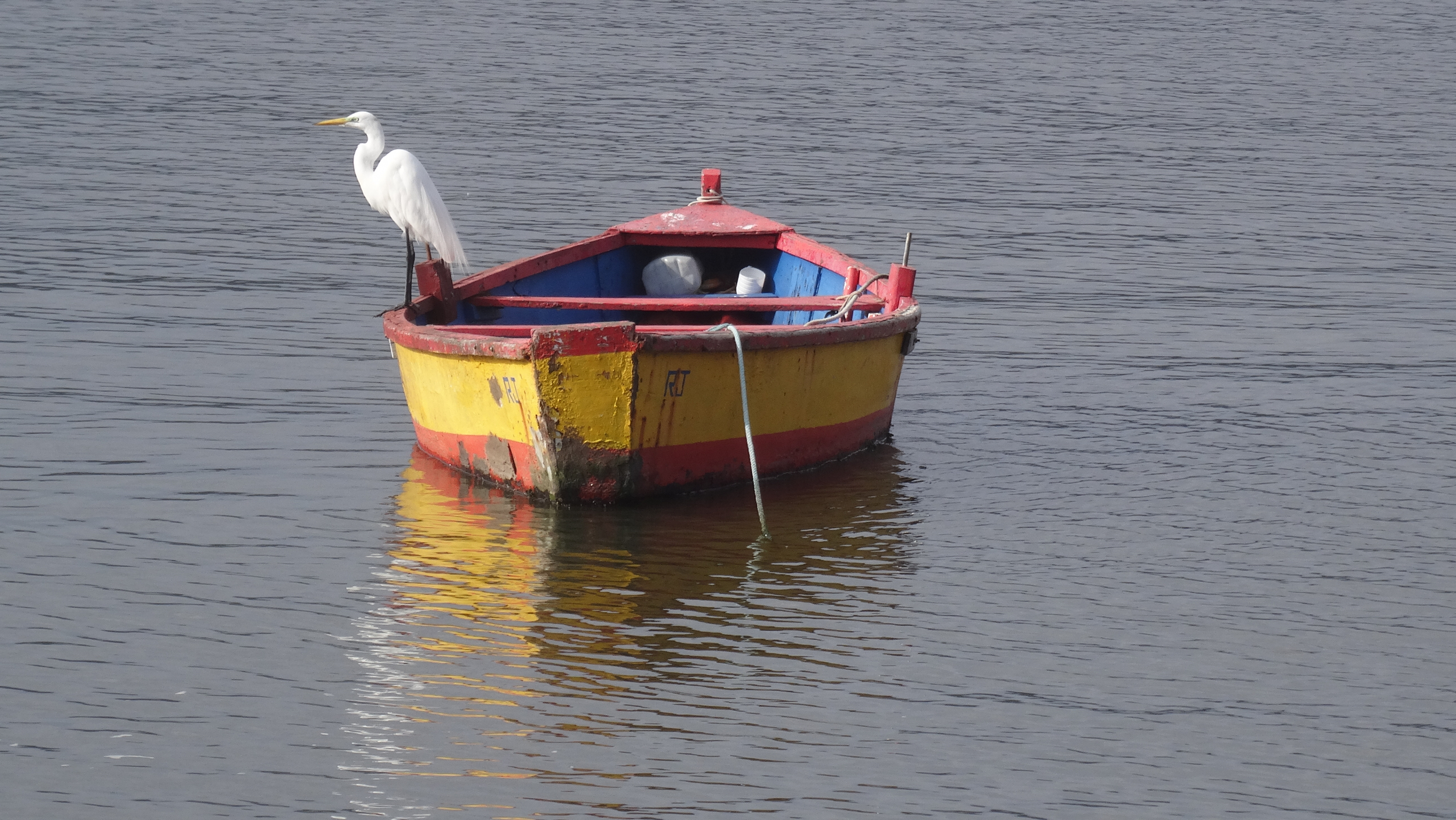 15. Fishing boat and Great Egret