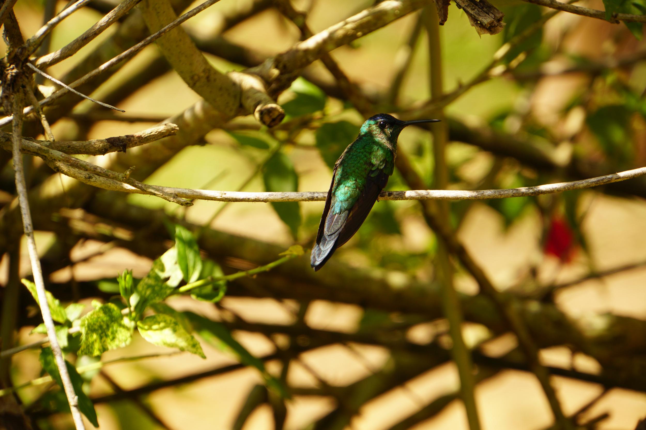 20. Hummingbird on hike