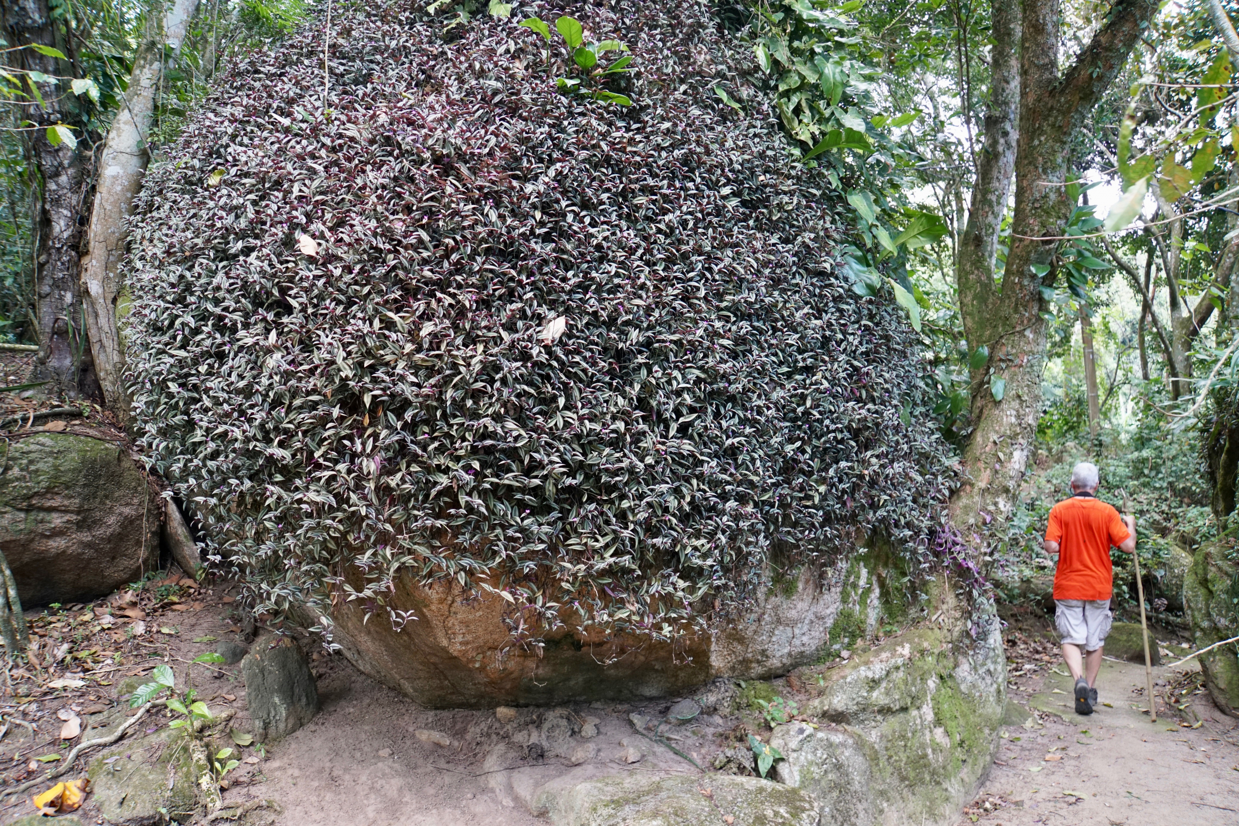 24. Boulder covered with plants