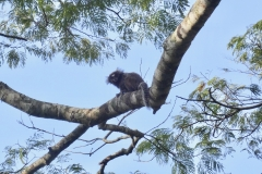 3. Monkeys in trees on the Bruce Trail