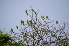 16. Parrots resting