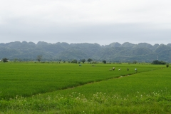 52. Fields in North DR
