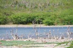 63. Pale flamingos