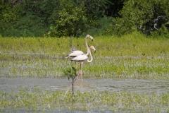 73. Flamingos in Laguna Oviedo