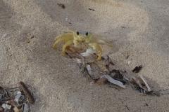 9. Beach Crab