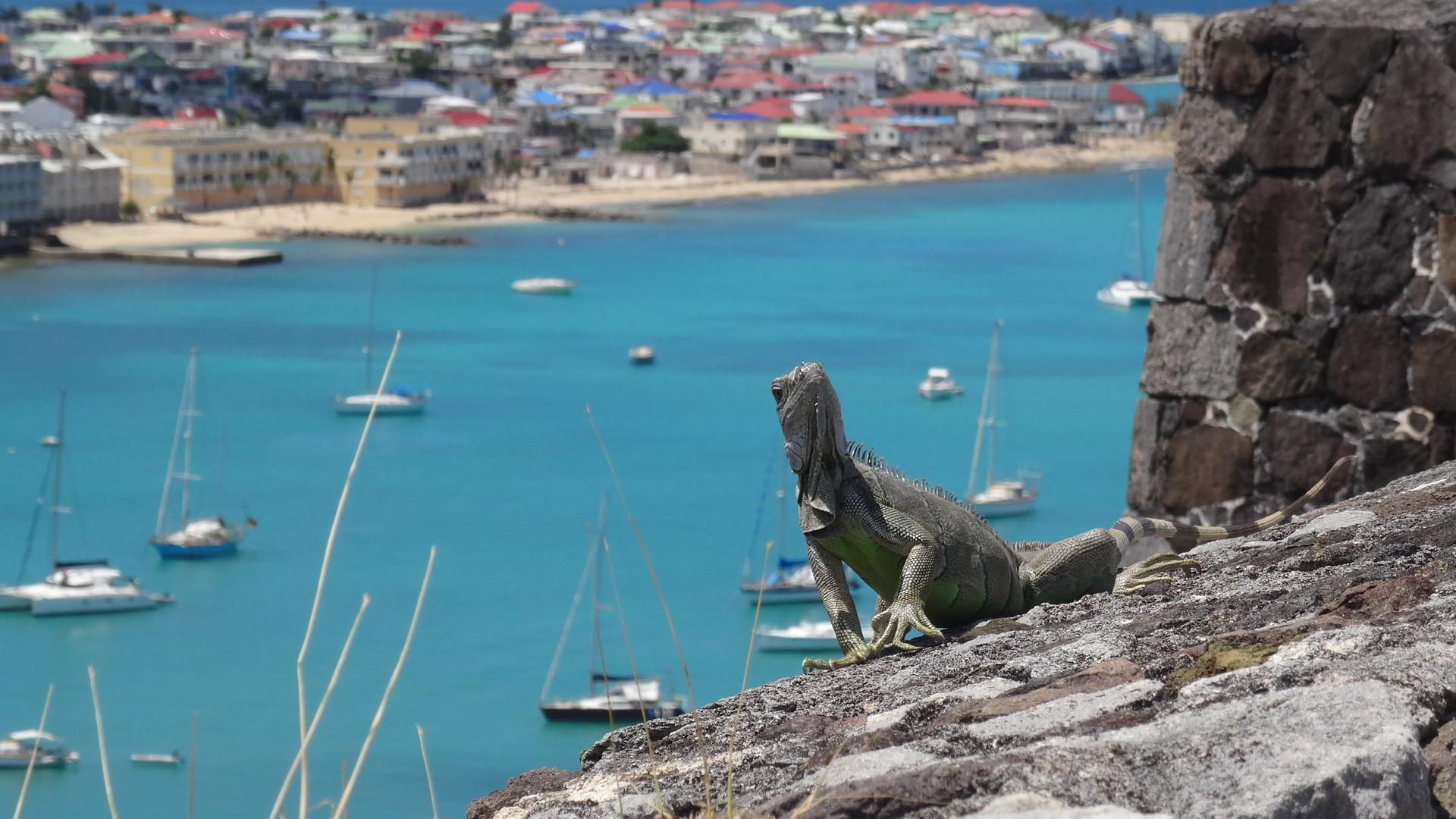 3. Iguana at Fort Louis