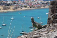 3. Iguana at Fort Louis