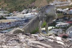 4. Iguana Guard