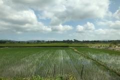 5. Crops inland Ecuador