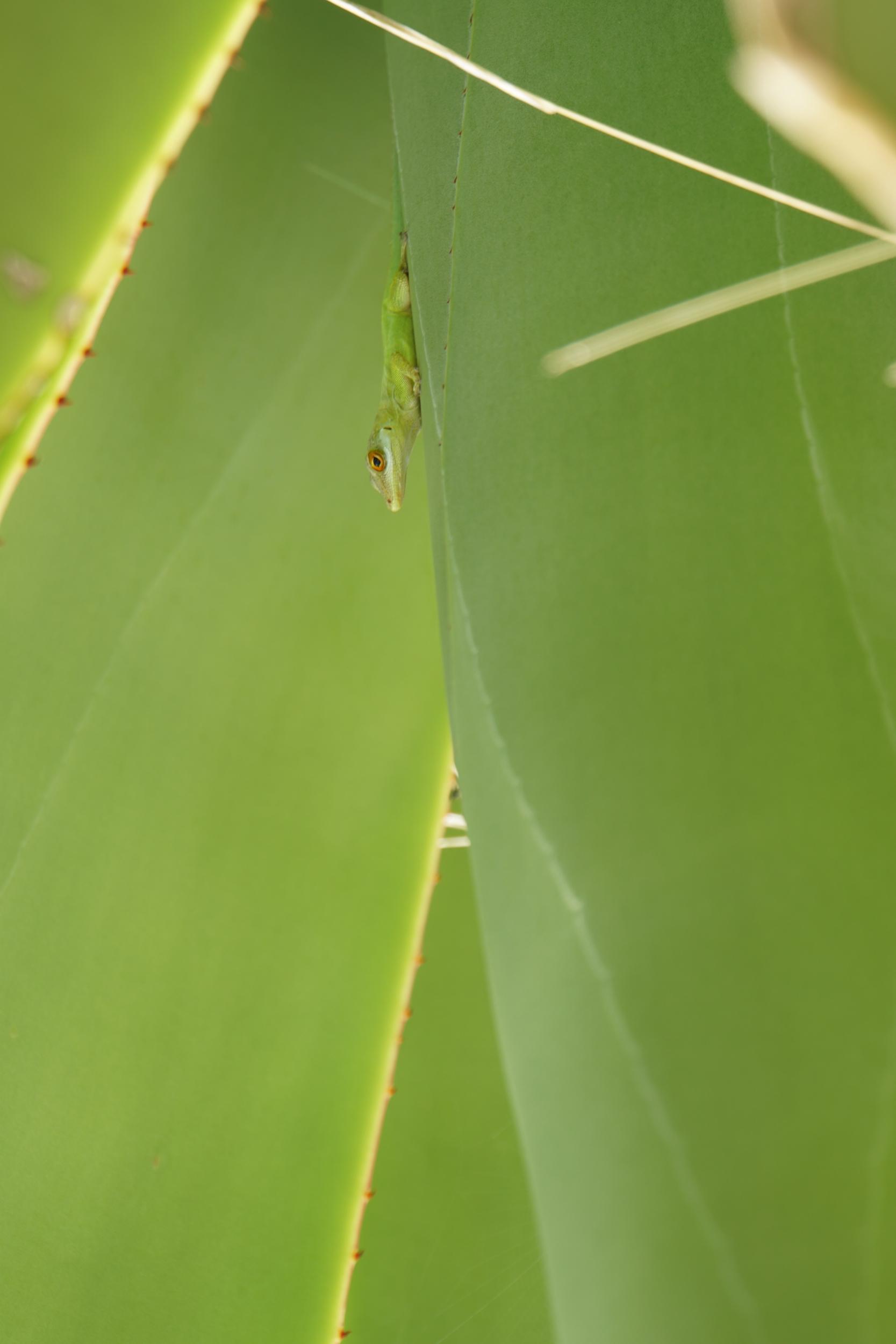12. Lizard hiding...