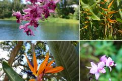 18.-Flowers-in-Kauai