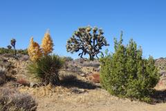 14.-Views-while-hiking-in-Joshua-Tree