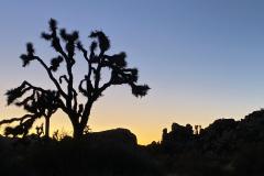 15.-Sunset-in-Joshua-Tree