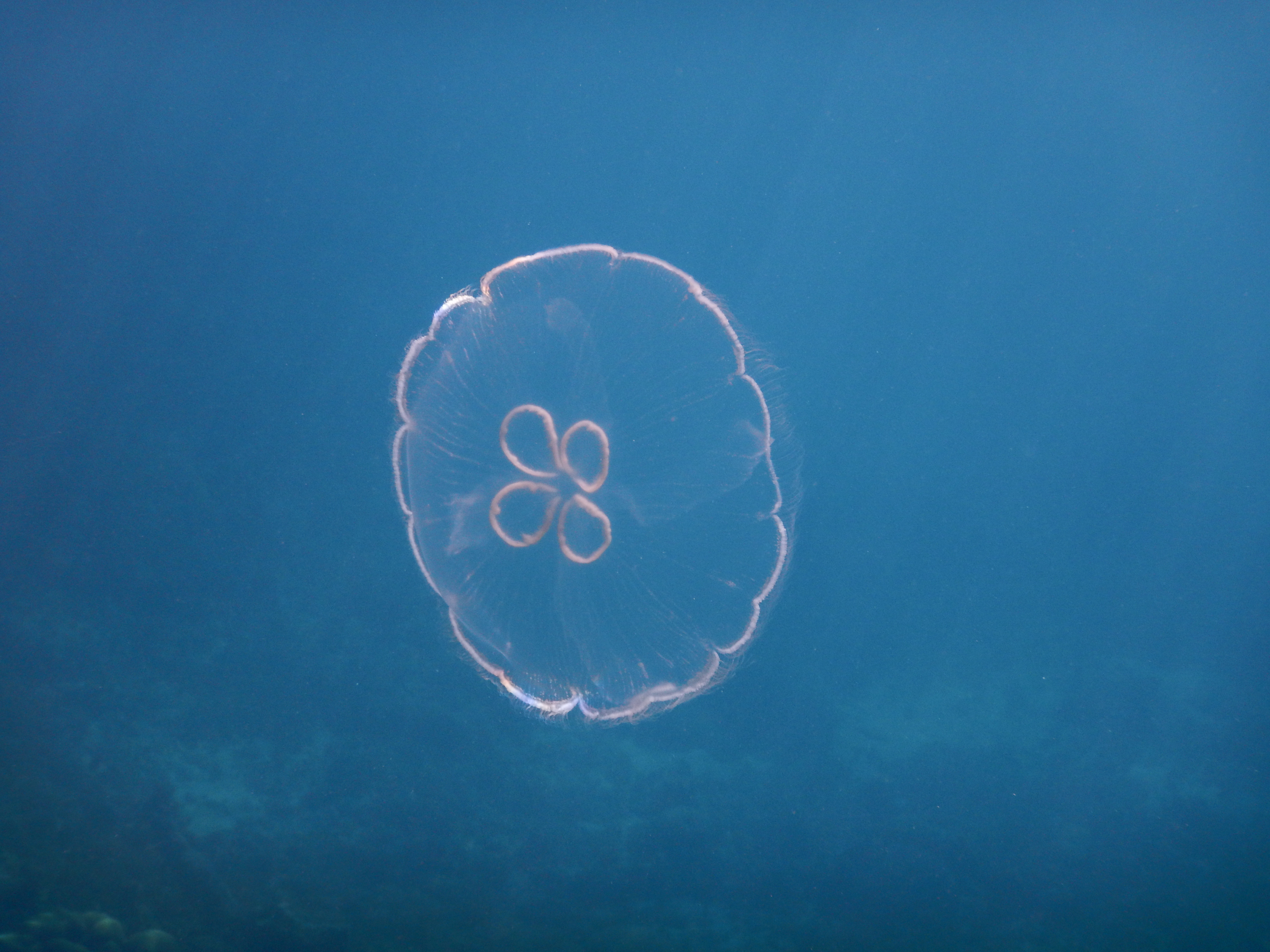 59. Jellyfish ..and you shall be called squishy