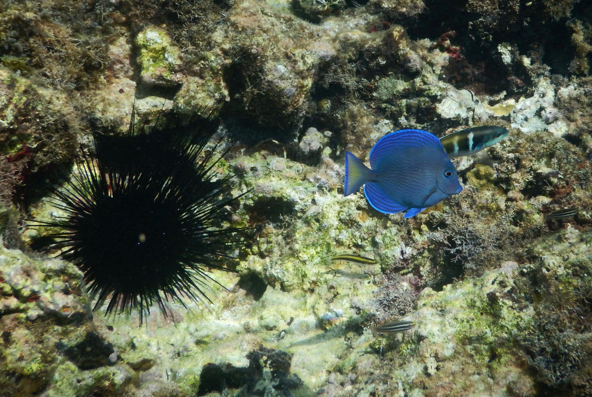 60. Under the sea