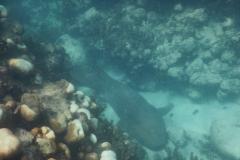 40. Nurse shark off Alligator Reef