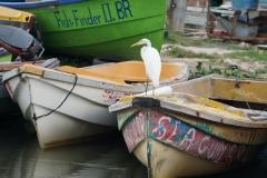 51. Great White Egret