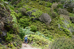 12.-Hiking-in-the-forest-towards-the-south-part-of-the-island