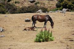 4.-Horses-grazing