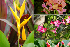 14.-flowers-of-Fatu-Hiva