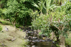 4.-Peaceful-stream-in-Fatu-Hiva