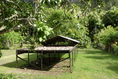 6.-Copra-for-making-coconut-oil