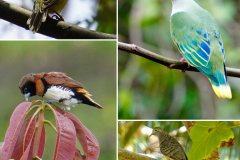 8.-Birds-of-Hiva-Oa