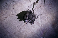 46. Bats in cave