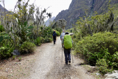 10.-First-part-of-the-trail-with-cactus-and-moss-hanging-on-the-trees.-Note-the-size-of-our-packs
