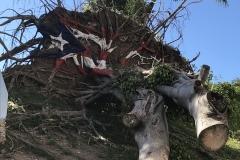 16. Flag painted on uprooted tree