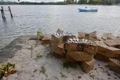 52. Good day fishing, Sapinho