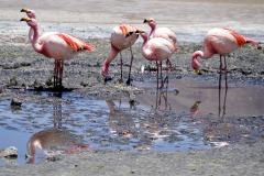 41.-More-flamingos