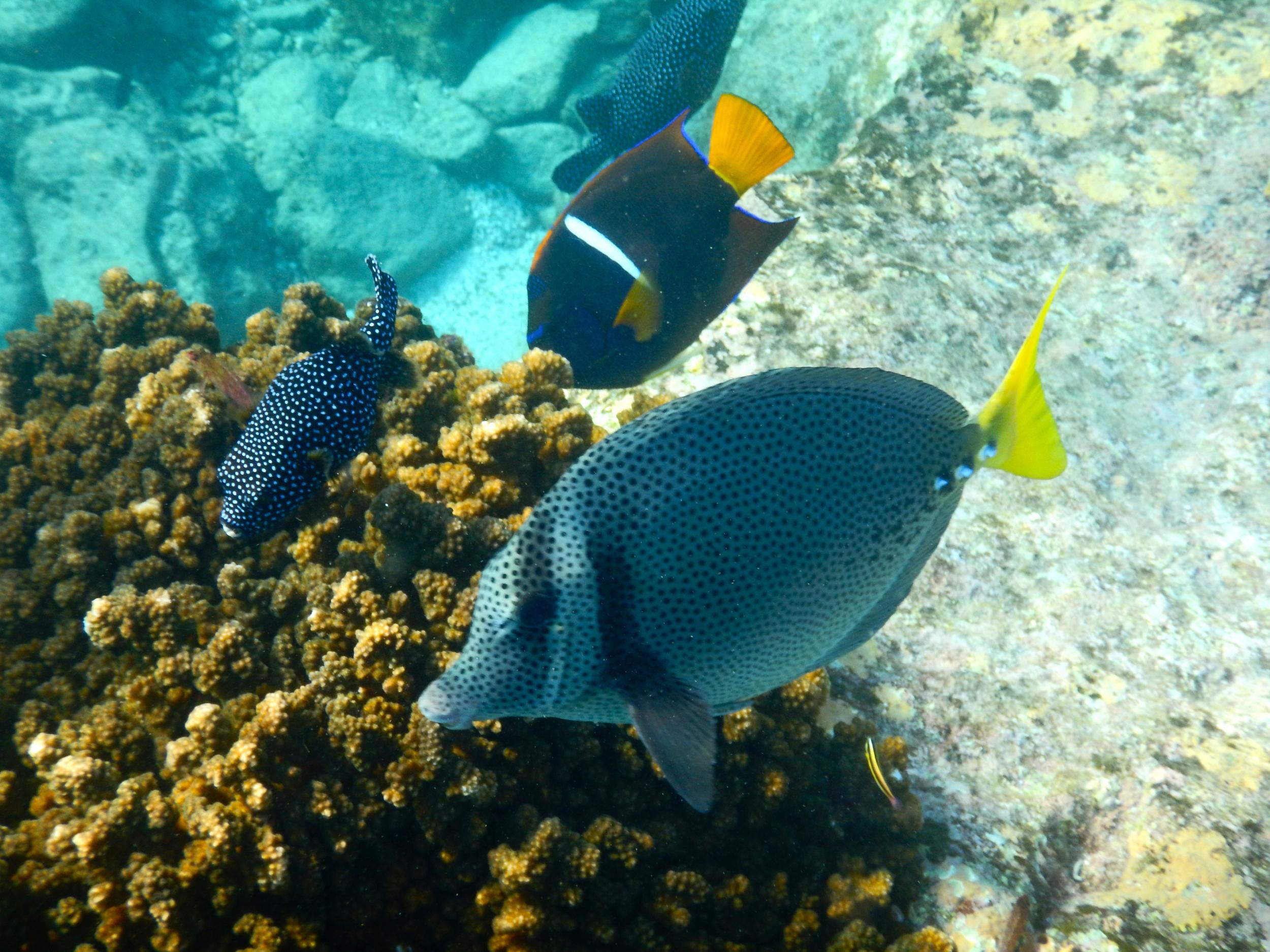 9. Fish at Los Islotes