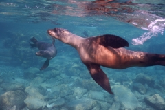 10. Swimming with the sea lions, Los Islotes