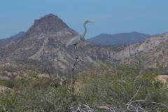 32. Heron in the lagoon