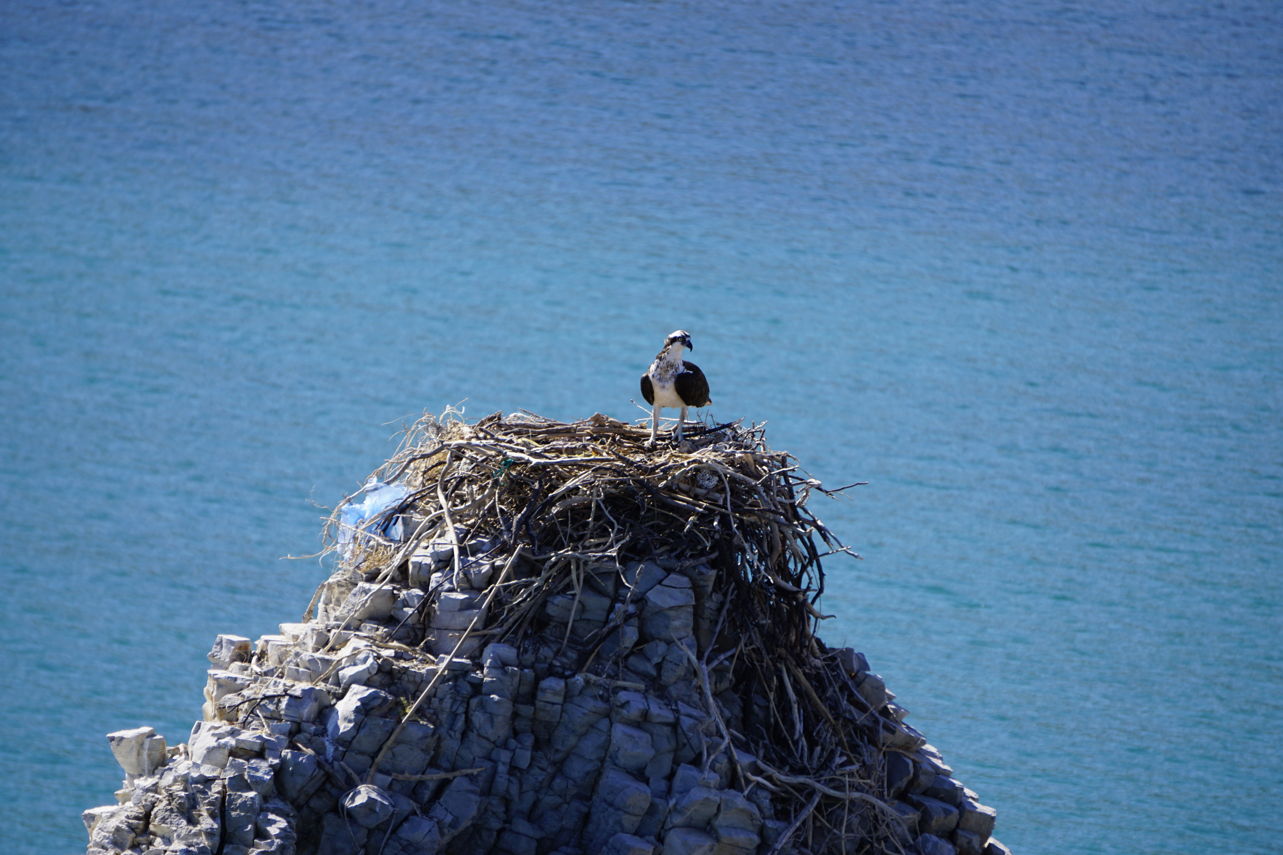 10. Osprey in San Juanico