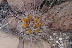 22. Cactus