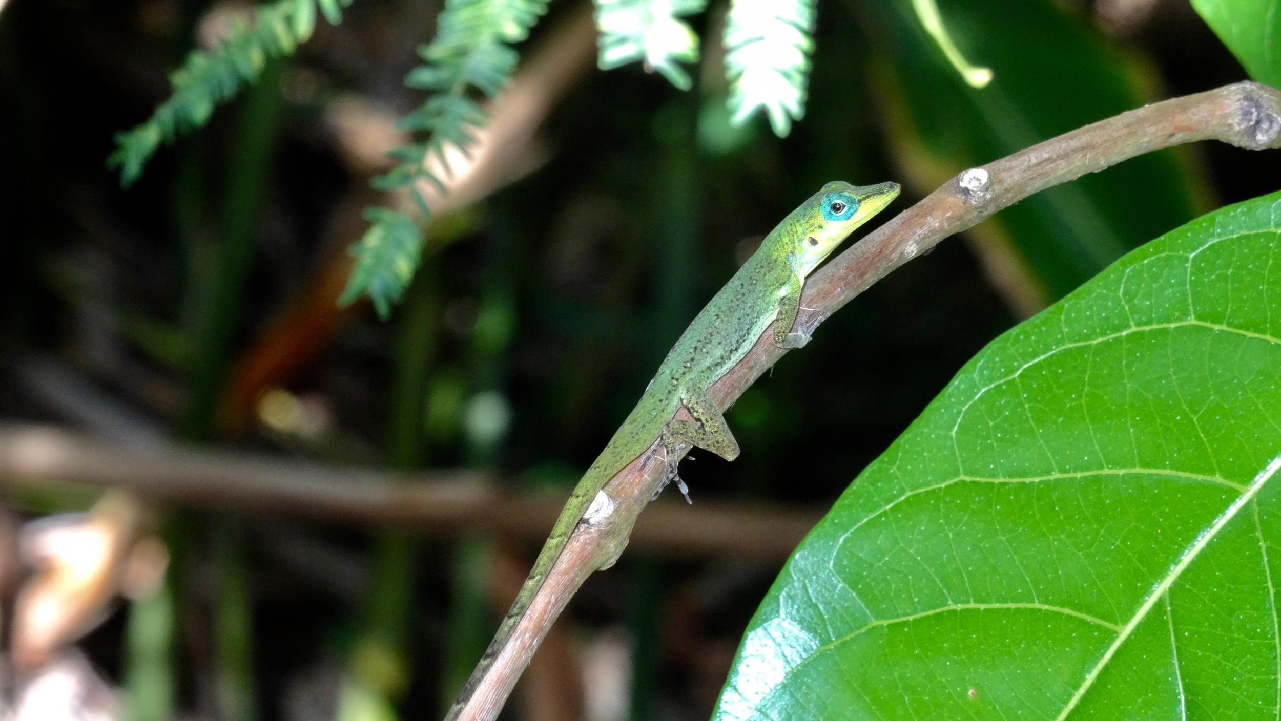 33. Lizard hiding in the garden