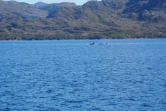 13.-Orcas-in-Straits-of-Magellan
