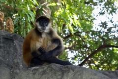 14. Monkey Island, Las Isletas