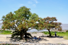 13. Ceibo trees along the shore